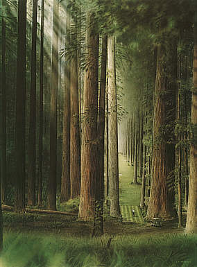 No. 3 Redwood Forest Golf Course, golf art print by Loyal H Chapman